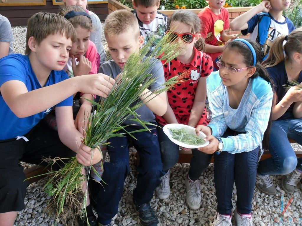 Így térnek vissza a gyerekek a természetbe