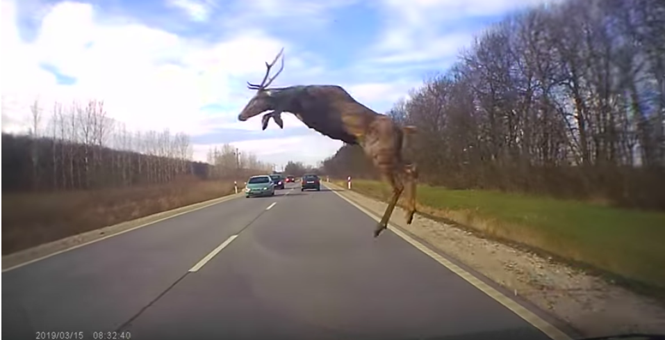 Ez a sofőr élete fékezése közben készítette élete videóját!