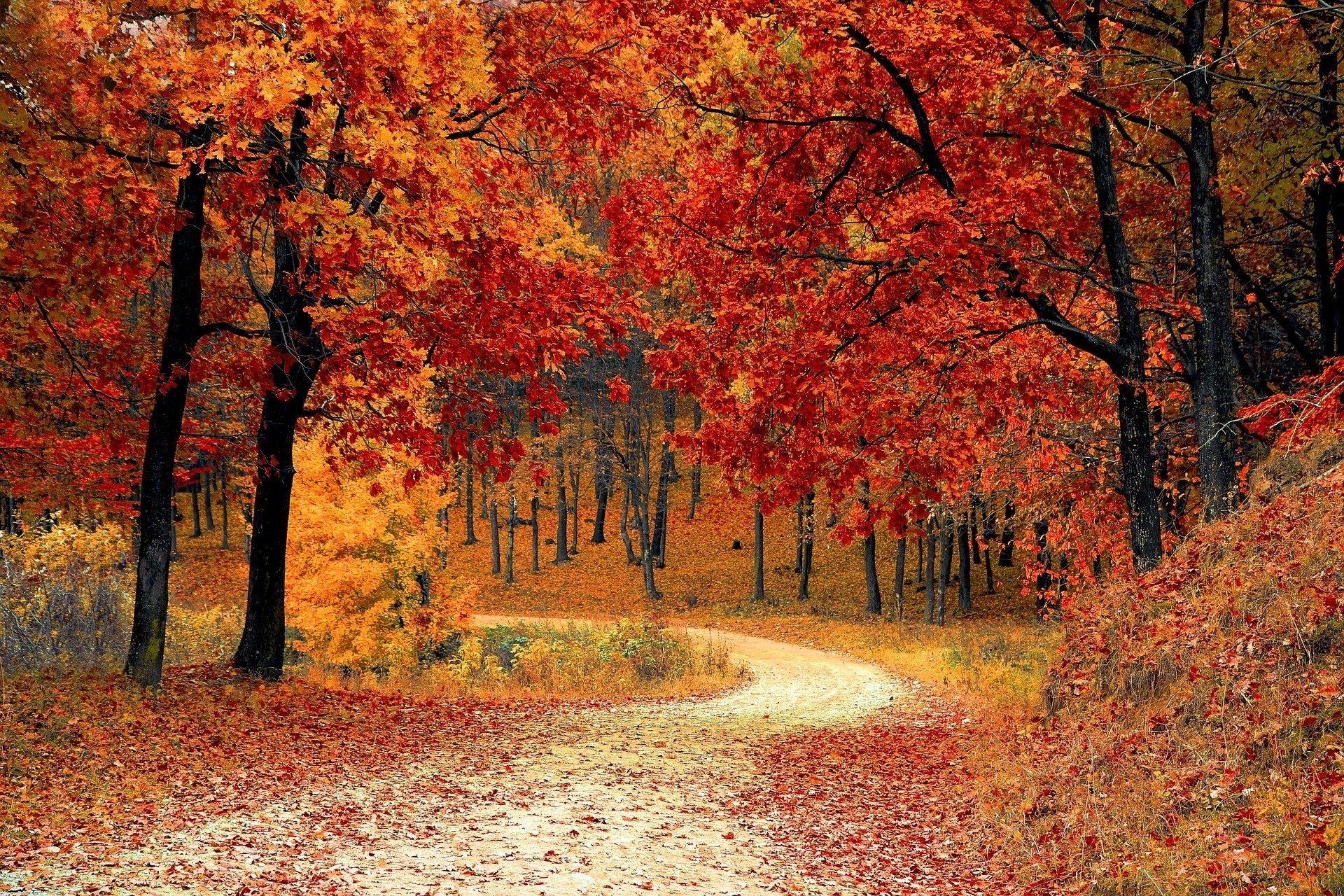 Ősszel is menjünk az erdőbe!