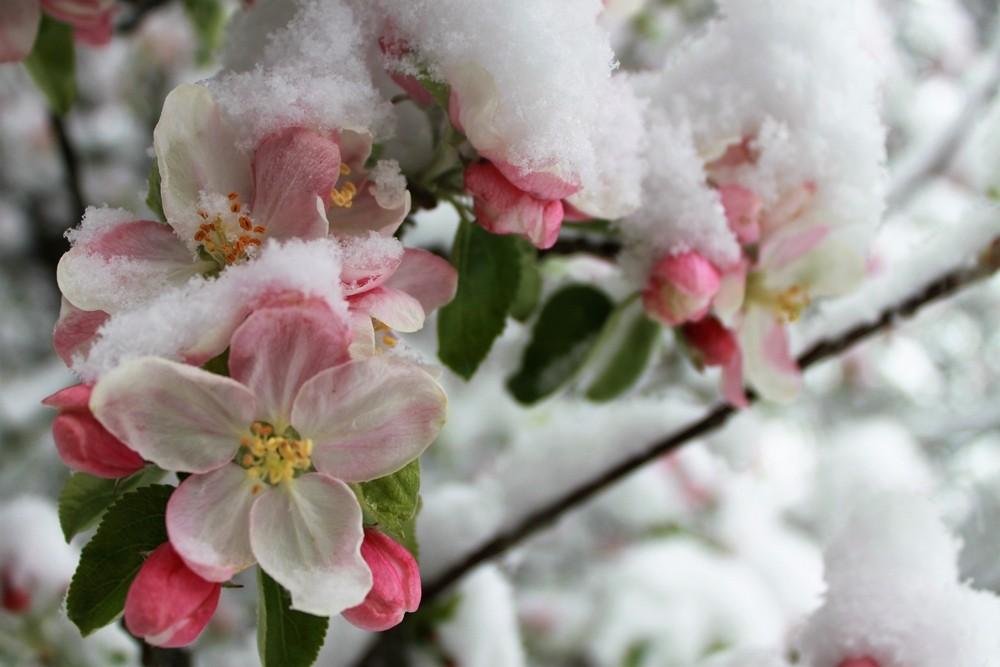 A múlt heti erősen fagyos időjárás helyenként okozott kárt