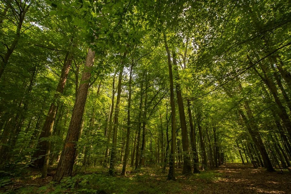 Április végéig feloldják az erdőlátogatási tilalmakat a Balaton környéki erdőkben