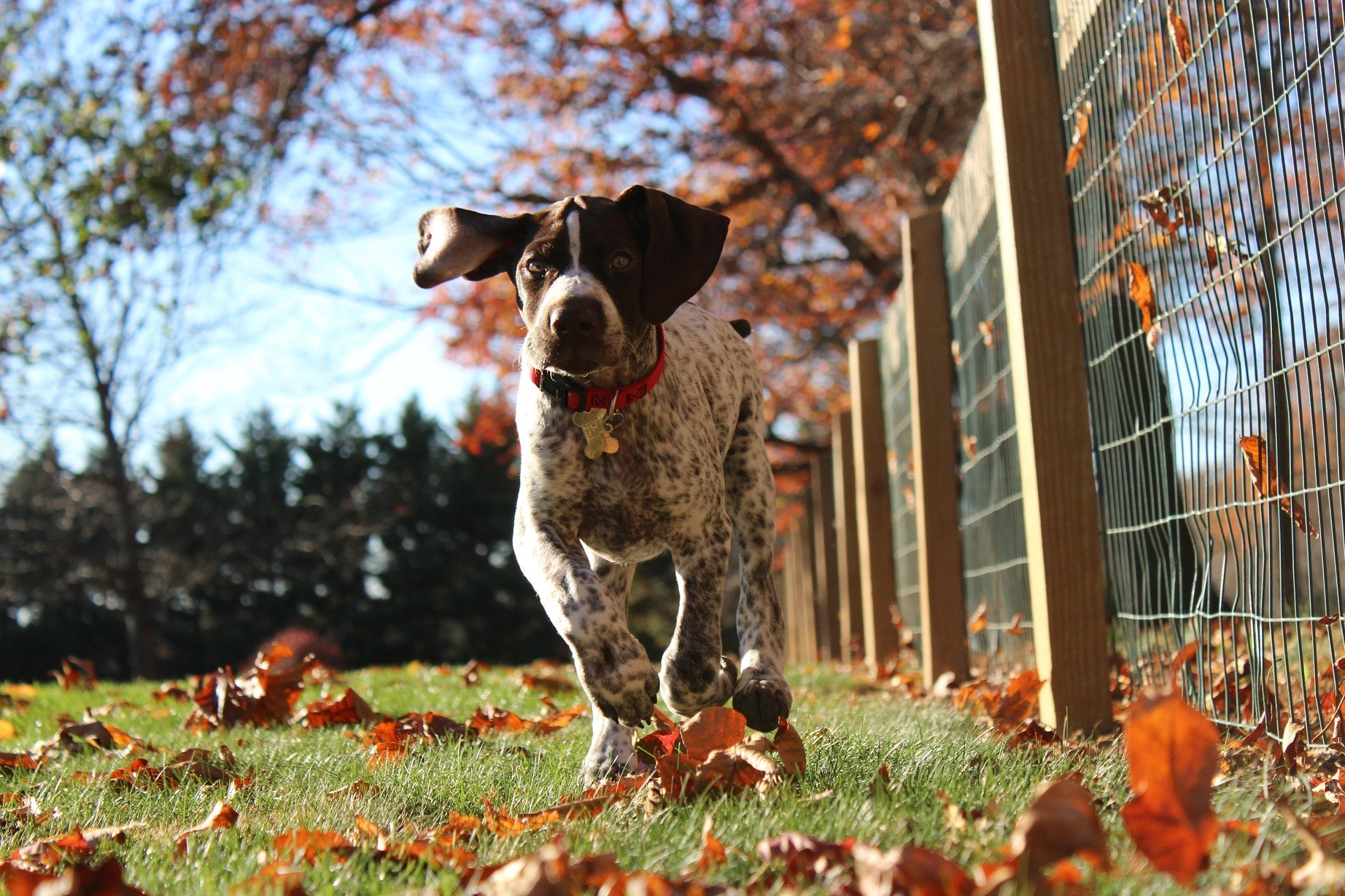 Az ősz veszélyei a kutyákra otthon és a természetben
