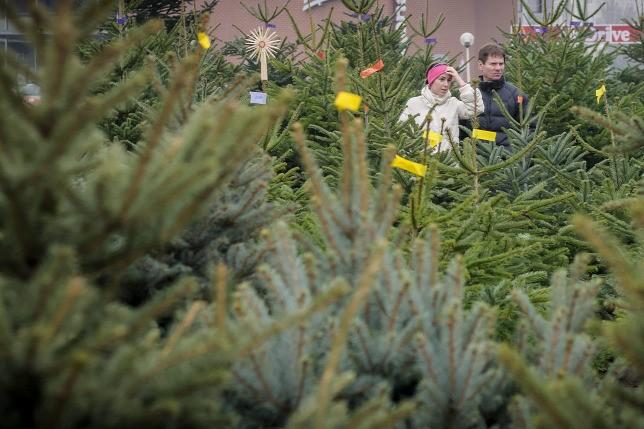 Karácsony - Már érkeznek a fenyők az árusítóhelyekre