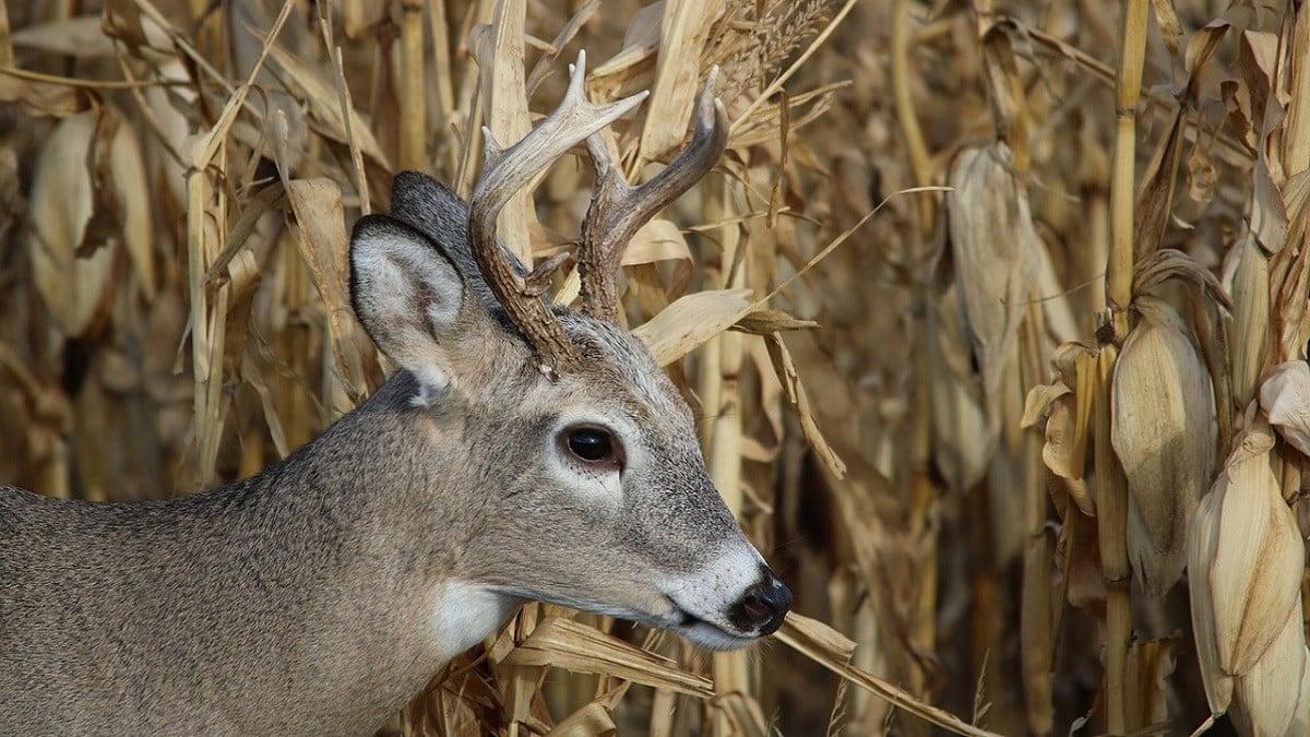 Egységes vadkárfelmérési útmutatót készít az agrárkamara