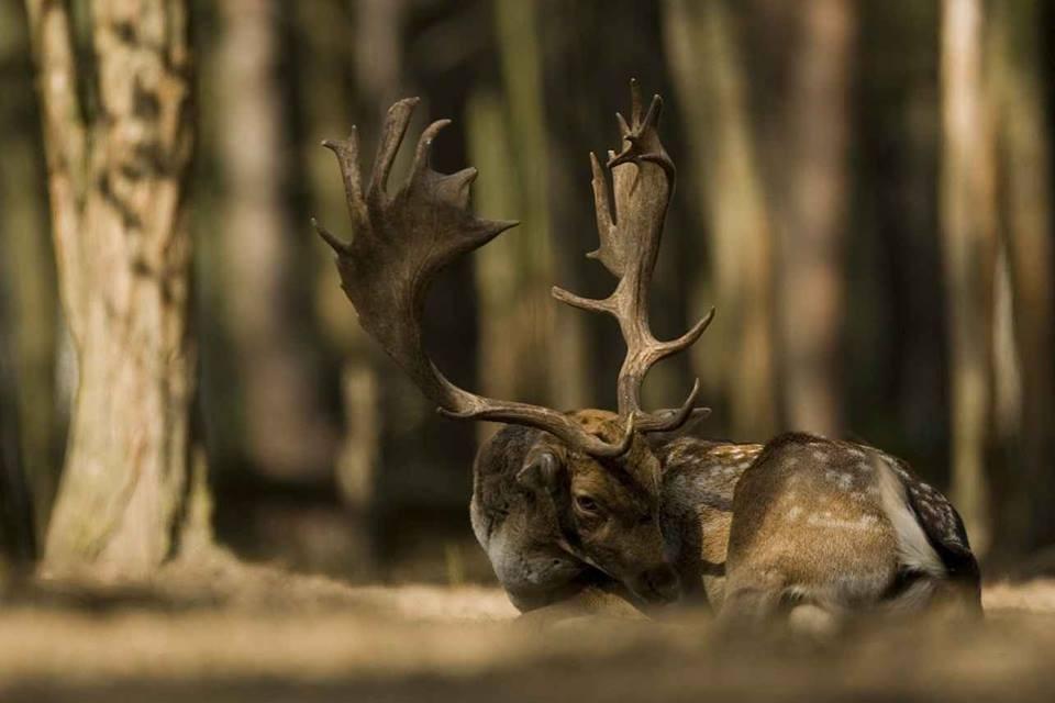Az erdőkre is vonatkozik a látogatási tilalom Somogyban