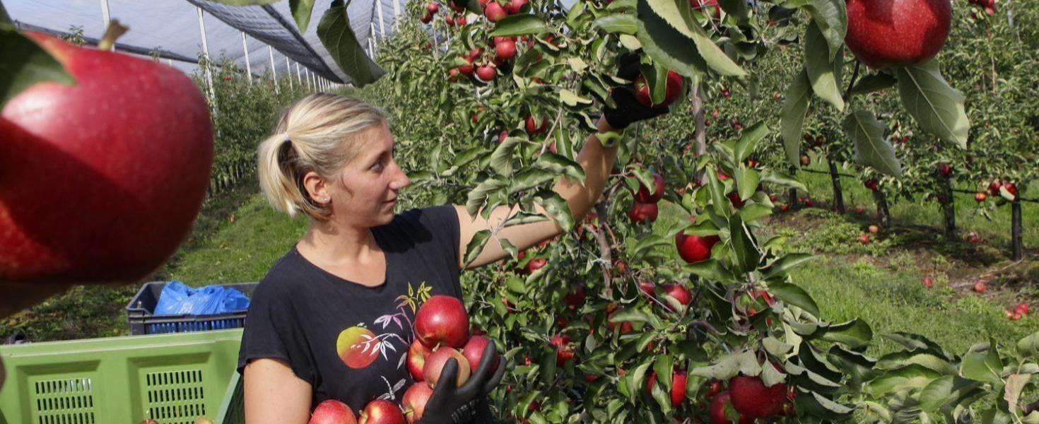 Megháromszorozódott a kistermelők száma