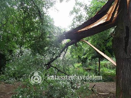 Az erős szélben kidőlt fák okoznak gondot Somogyban és Zalában