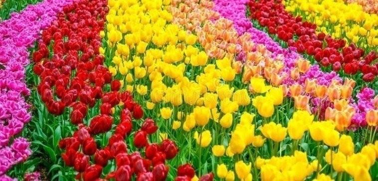 Megkezdődött a virágosítási verseny Siófokon