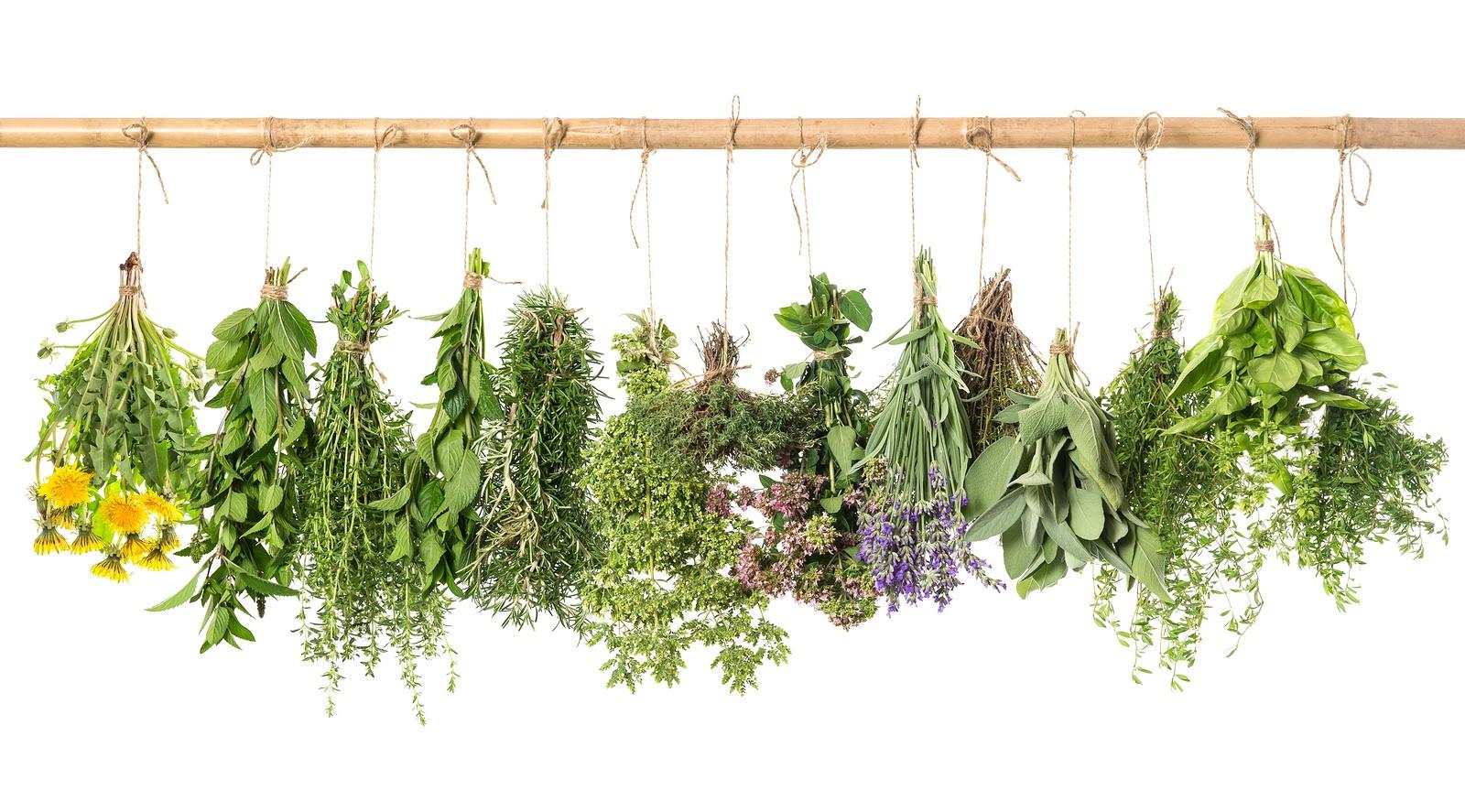 Gyógynövénytermesztők figyelem: még sok pénz vár gazdára a pályázati büdzsében