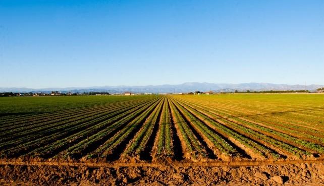Jelentős mértékben megugrott a termőföld ára Tolna megyében