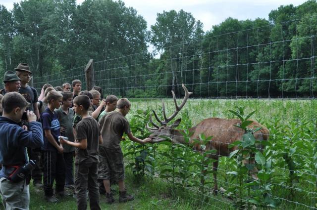 Napközis táborba várják a diákokat Pörbölyön