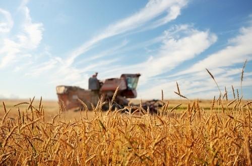 Tolnában is befejeződtek a nyári aratási munkák