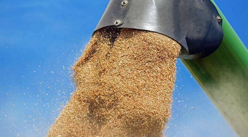 7,2 millió tonna kalászos gabona termett idén