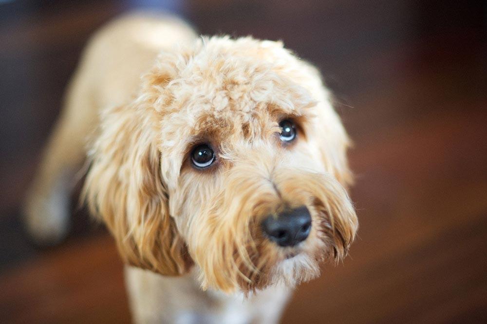 Teltház a szekszárdi kutyamenhelyen– sokan szabadulnak meg háziállatuktól