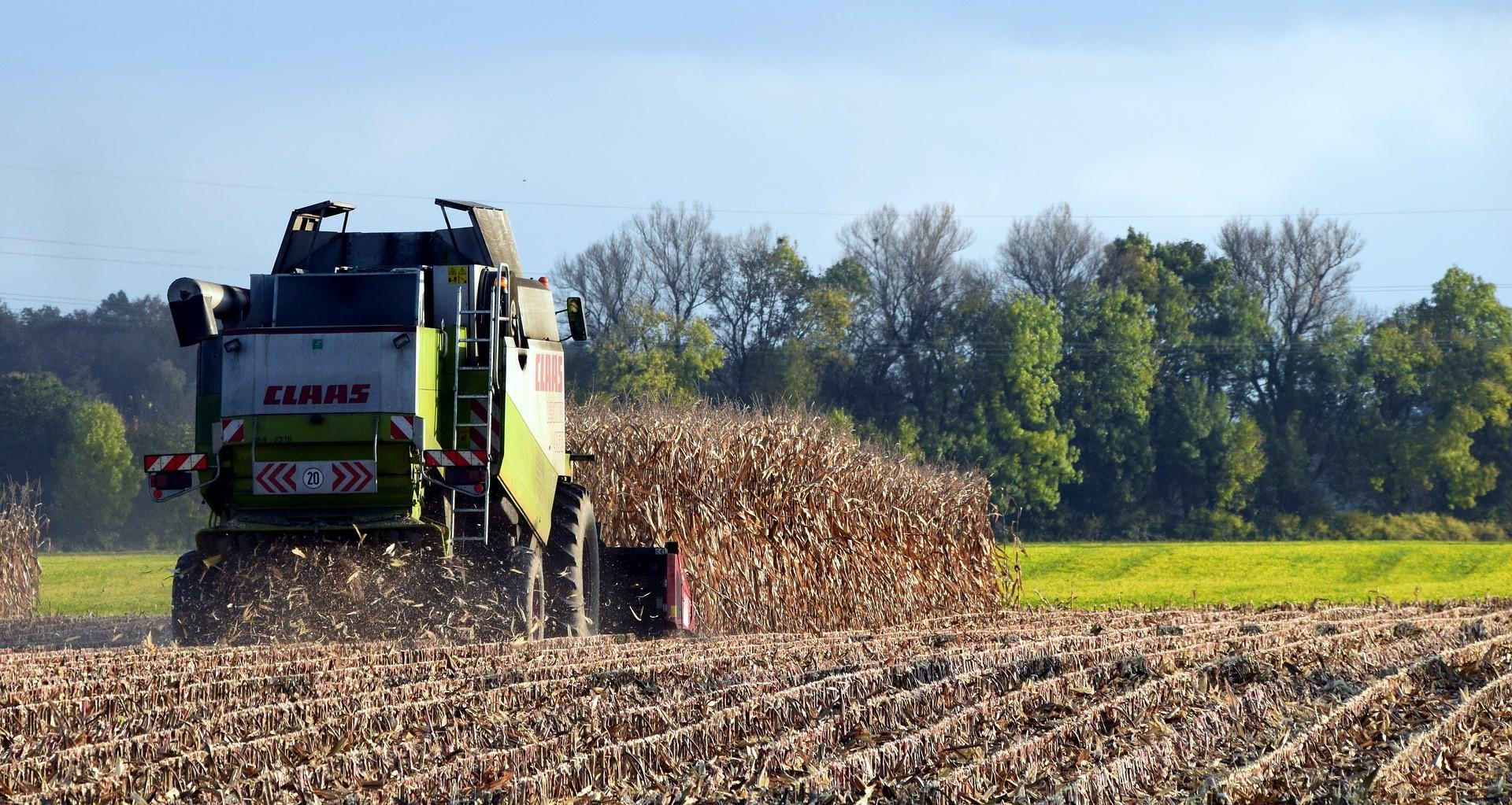 Tolnában lett a legmagasabb a kukorica termésátlaga