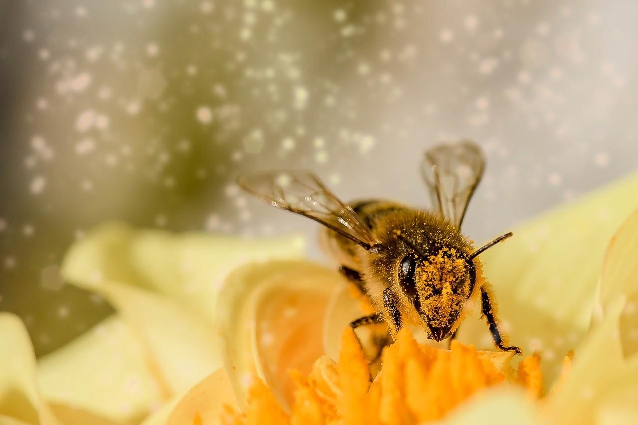 A beporzó rovarok védelmének érdekében darázsgarázsok elhelyezésére biztatnak a természetvédők