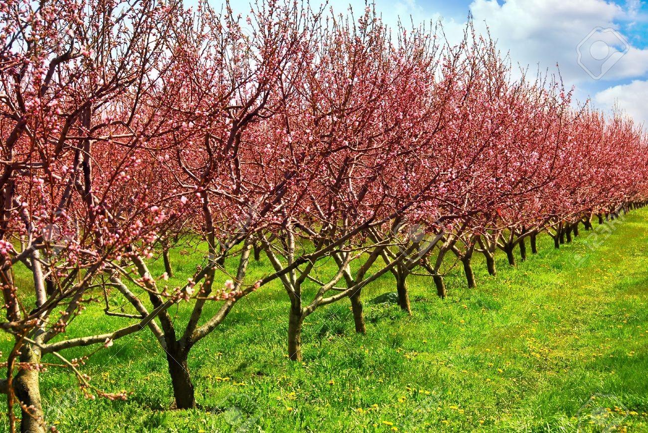 Ideje bejelenteni a gyümölcsültetvényeknél bekövetkezett változásokat