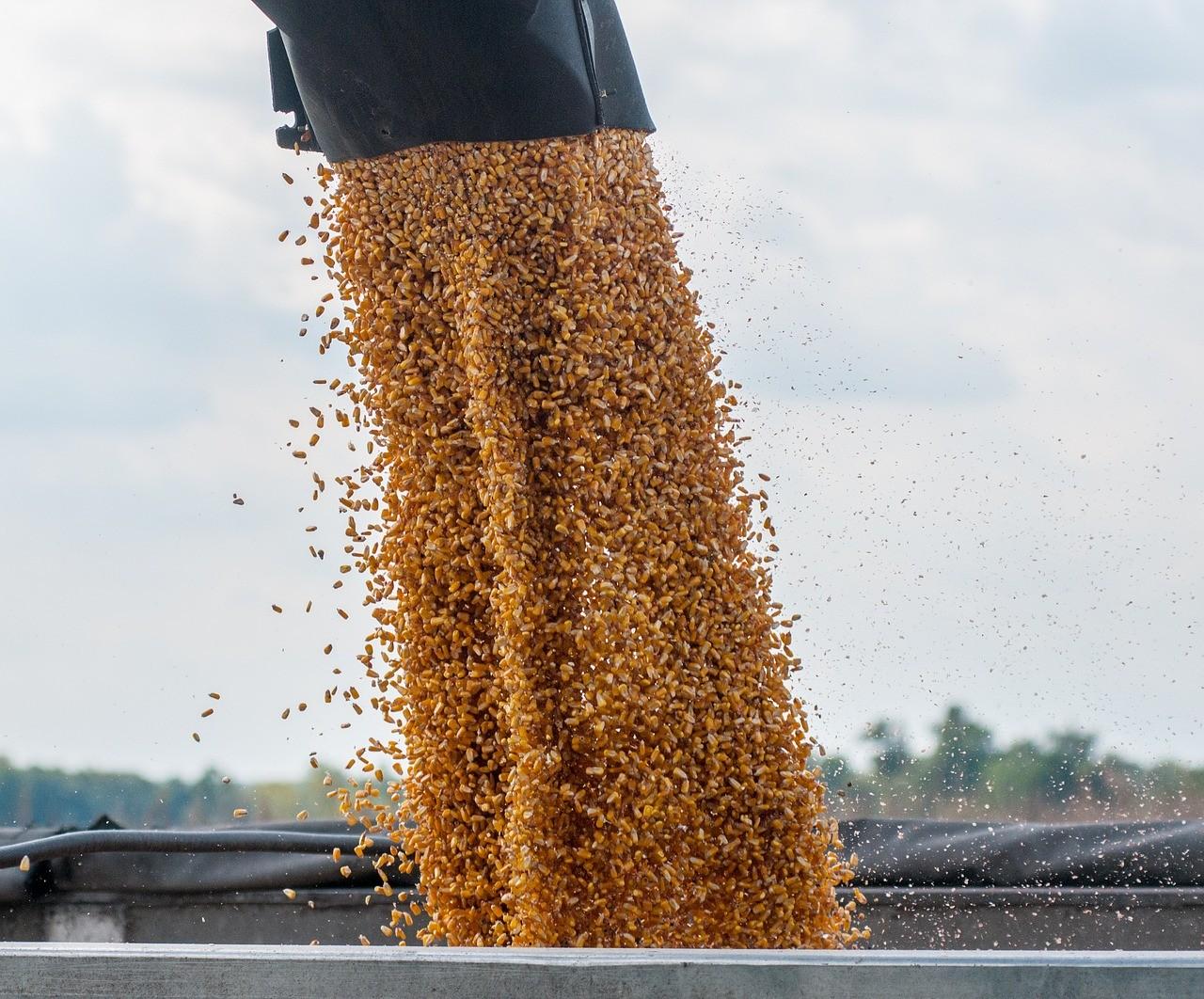 Kilenc tonna feletti a kukorica termésátlaga Tolnában