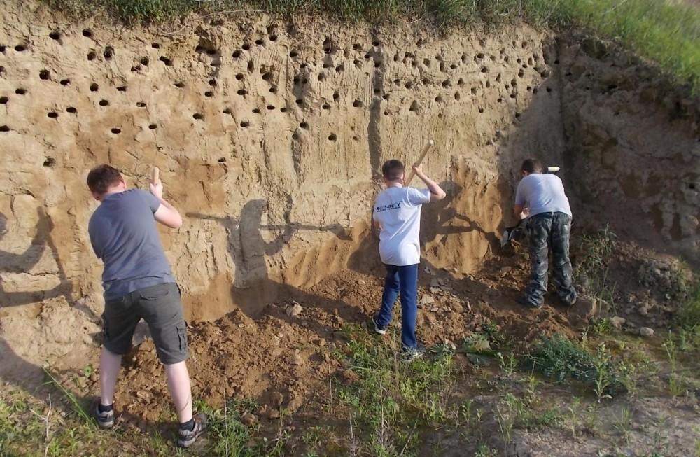 Növelni kell a fészkelőhelyek számát Dombóváron