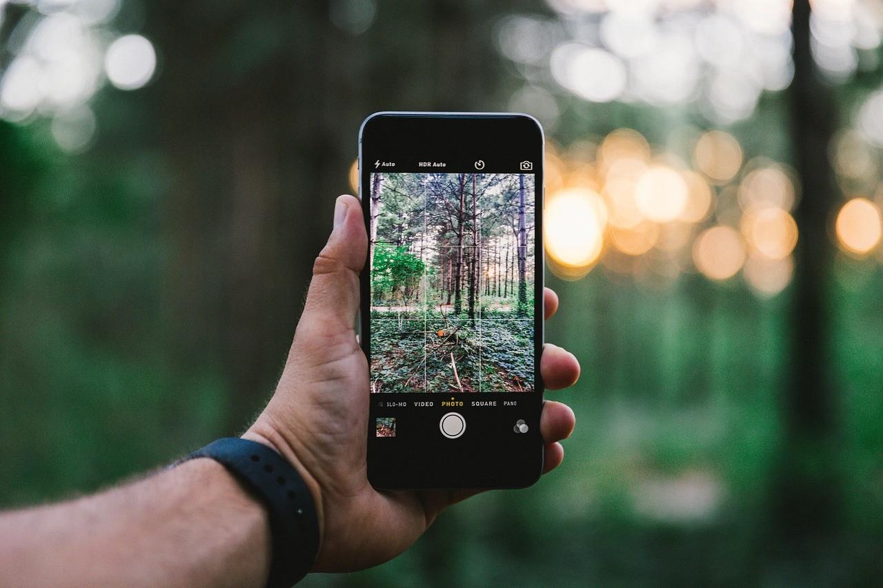 Kullancsszövetség: mobilalkalmazás is segít a védekezésben