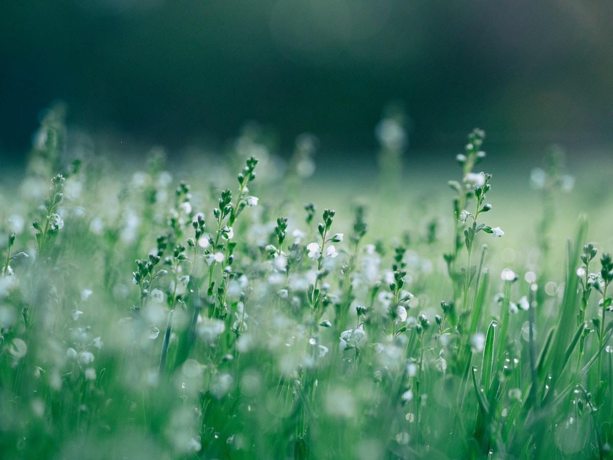 Szekszárdon a magas szintet is elérheti a pollenkoncentráció