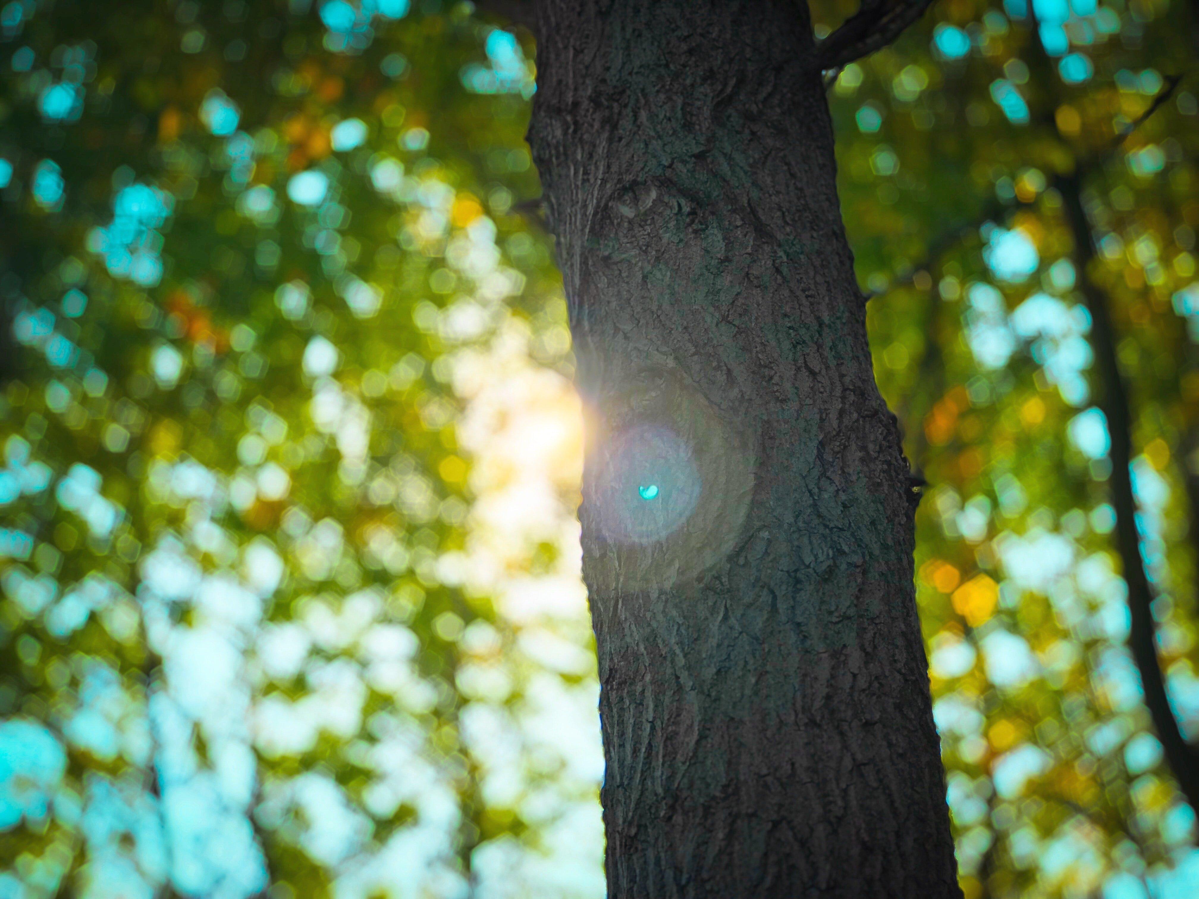 Regényes természet - Eredményt hirdettek a környezetvédelmi irodalmi pályázaton